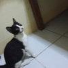 フィリピンの子猫ちゃんと一夜を明かしたのでレポートします。